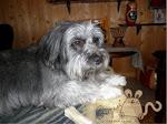 Ecco la mia affettuosissima canina...Sheila!
