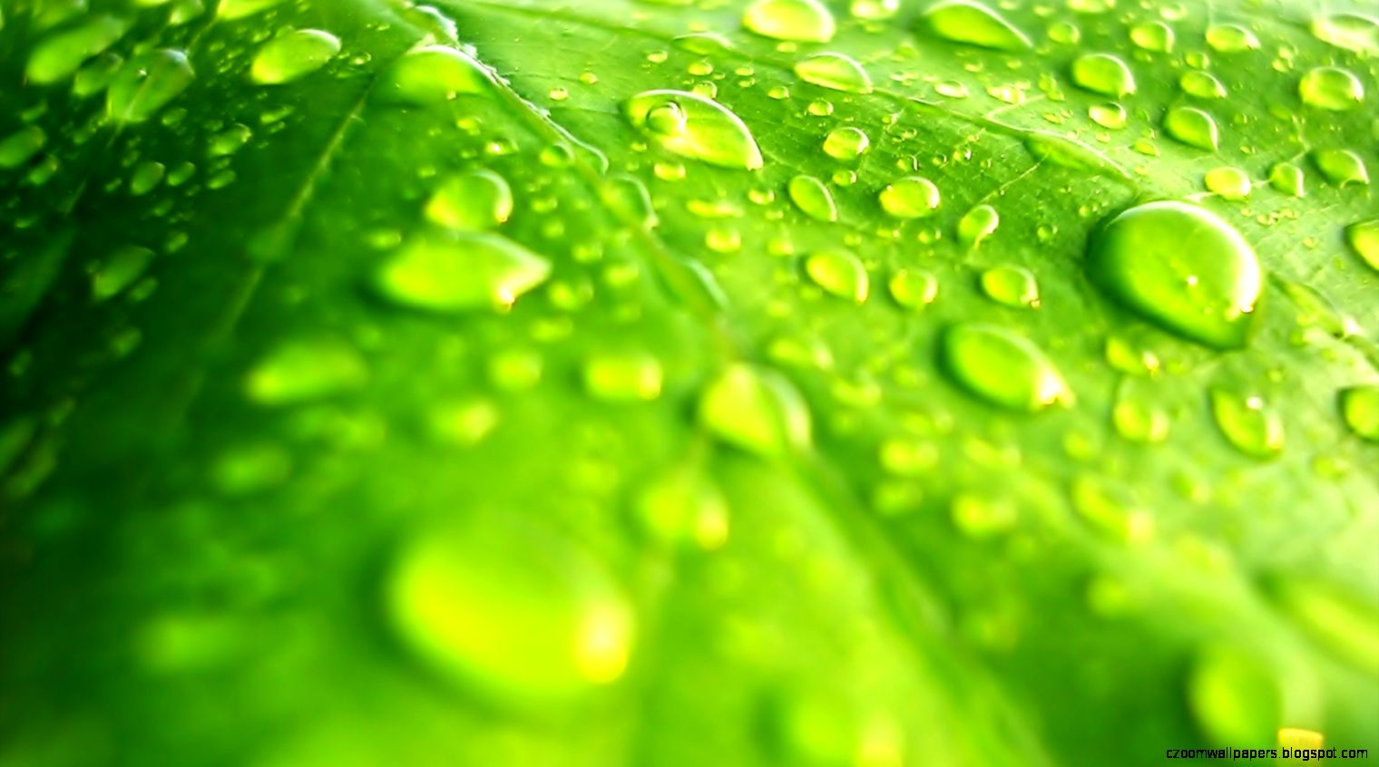Green Leaf Wallpaper