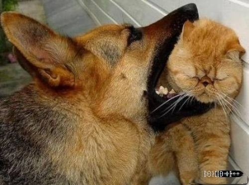 funny dogs and cats fighting