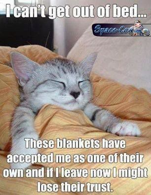 funny cute cat nap