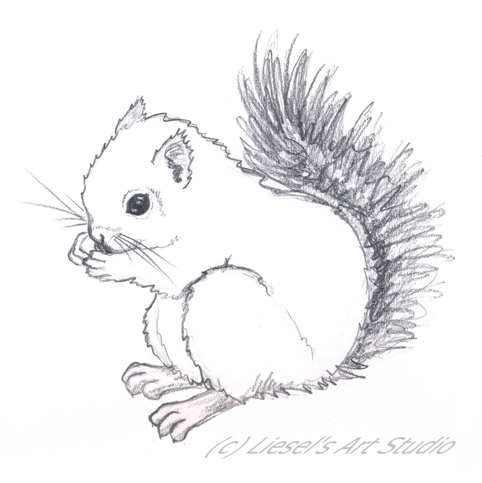 Line Drawing Squirrel : Squirrel drawing related keywords long