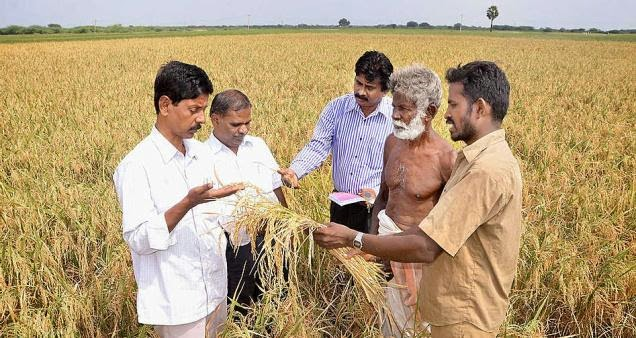 http://www.thehindu.com/news/national/tamil-nadu/foundation-seeds-of-new-rice-variety-ready/article6769851.ece