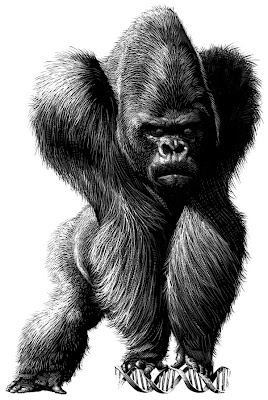 black gorilla animal drawing - pen illustrations - satire - art