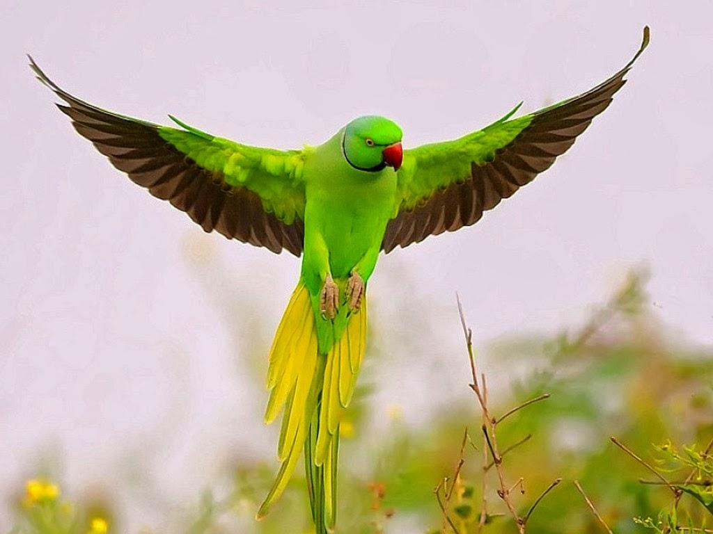 World Beautiful Birds : October 2013