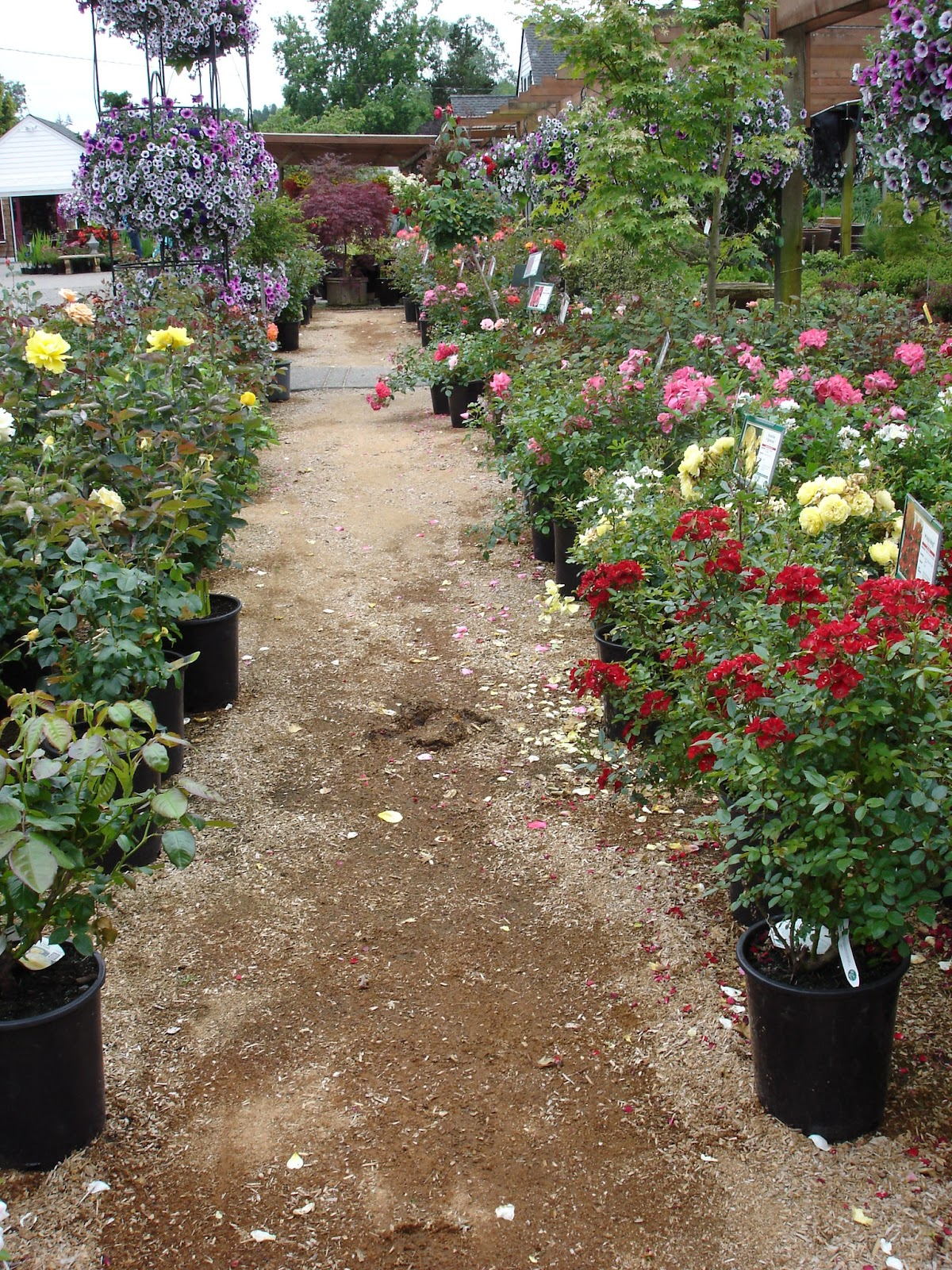 The Outlaw Gardener: Vassey Nursery - A family affair