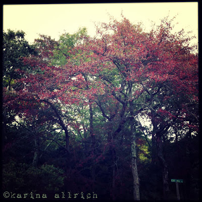 First Taste of Autumn on Cape Cod by Karina Allrich