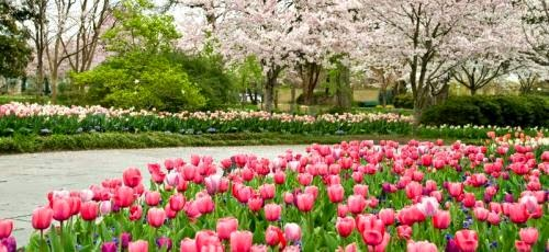 """The Dallas Arboretum Celebrates Dallas Blooms with the Theme """"Deep in the Hearts of Texans"""""""