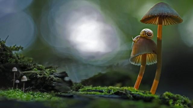 Canadian Sniles - chiocciola canadese - bella l'immagine