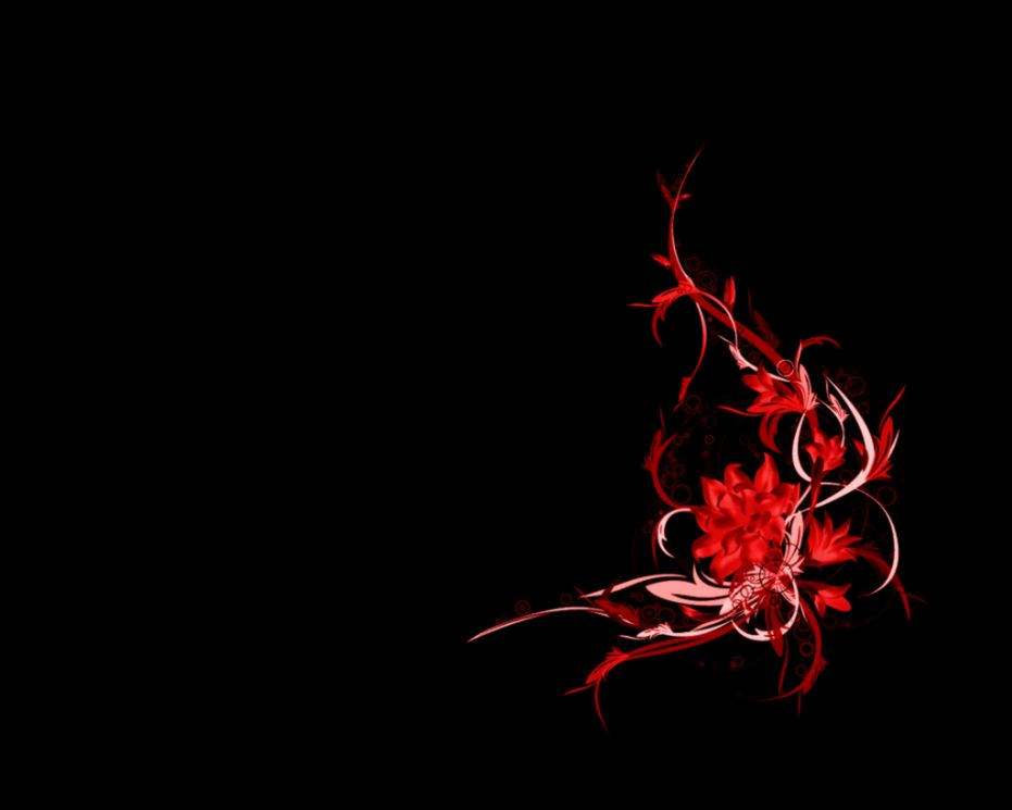 Red Flower Black Background   WallpaperSafari