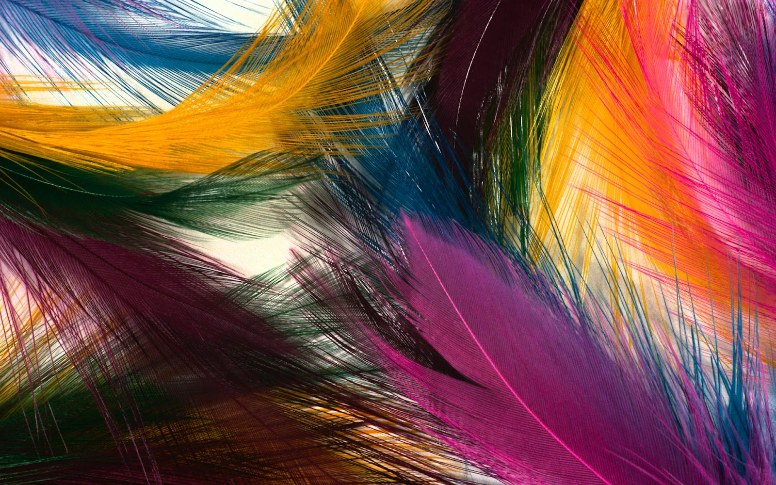 http://3.bp.blogspot.com/-_xwzGFNhFRw/T3KeUtka4mI/AAAAAAAAADs/8_XVkdjIID0/s1600/feather-colorful-wallpaper_1920x1200_85539.jpg