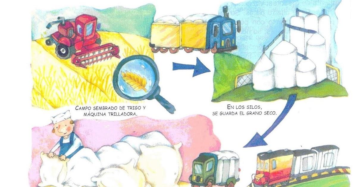 Circuito Productivo Del Trigo : Zona rural y urbana què es un circuito productivo