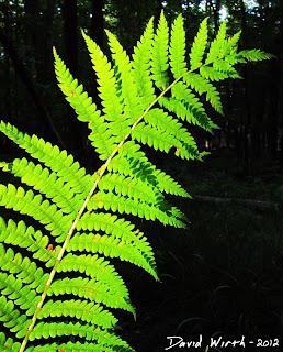 fern, forest, sunlight, prehistoric plant, hiking trail