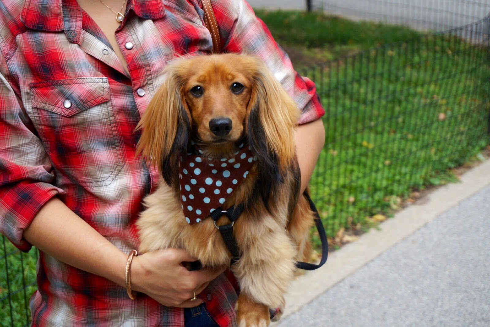 Les bananas how to groom a long hair dachshund unleashed spa how to groom a long hair dachshund unleashed spa self service dog wash nyc solutioingenieria Choice Image