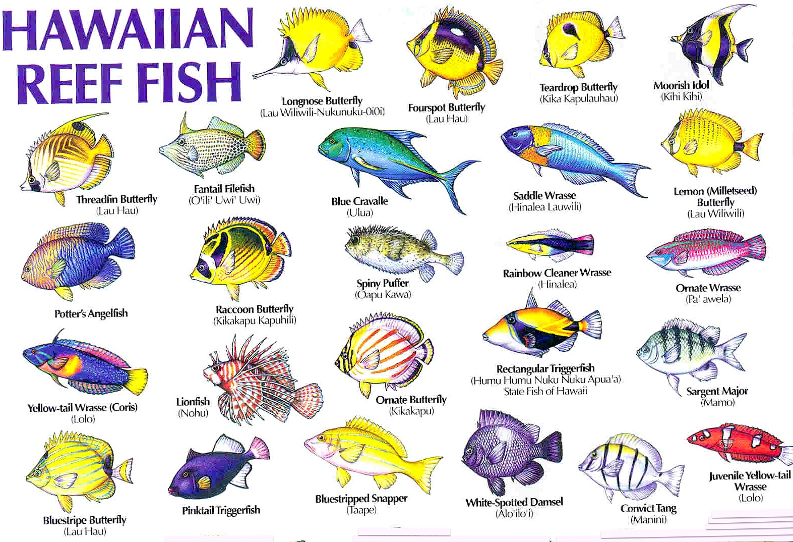 saltwater fish names hawaiian reef fish guide types of