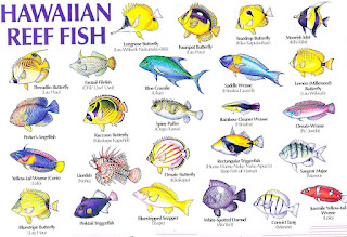 Hawaii Reef Fish Pictures