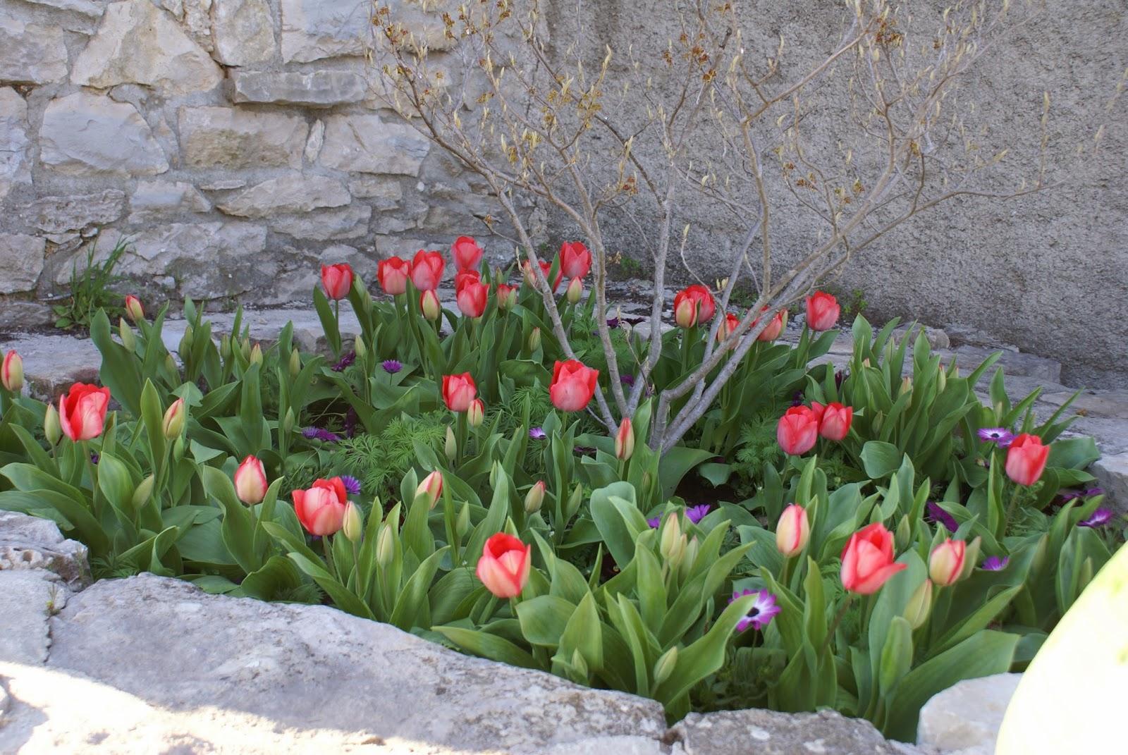 le jardin de prosper les prunelliers sont en fleur. Black Bedroom Furniture Sets. Home Design Ideas