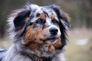 HarmonieLogie nach dieser Methode erziehe ich meine Hunde