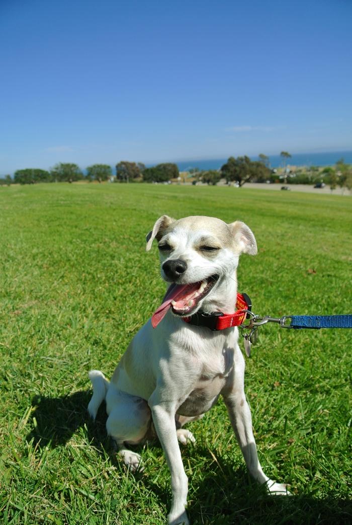 Malibu Dogs For Sale