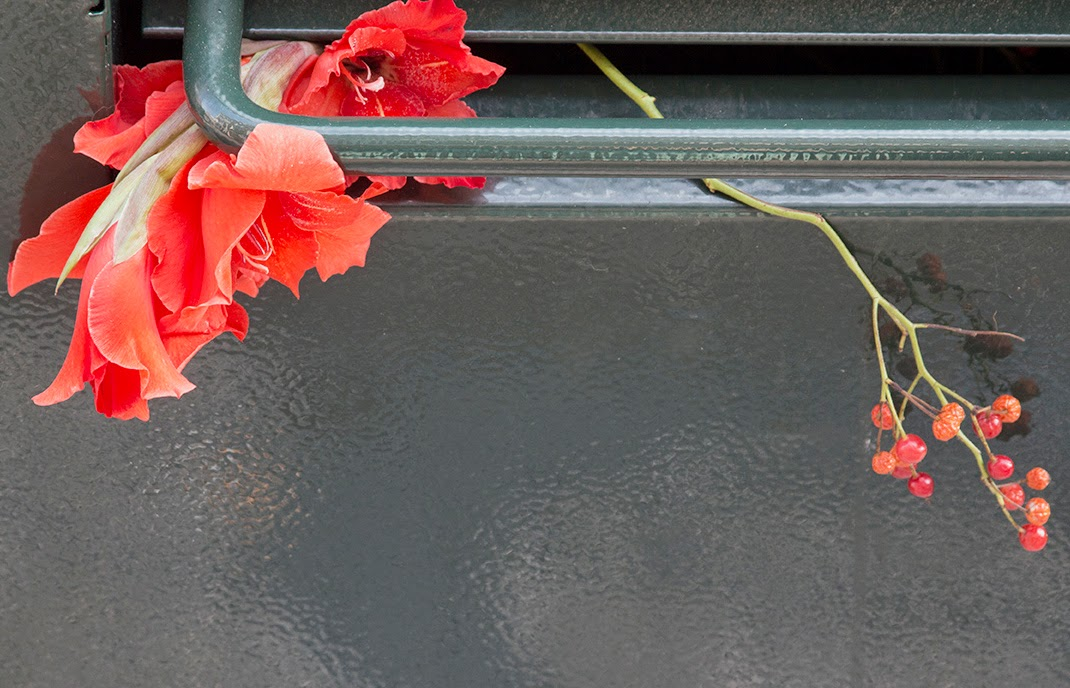 red gladioli in dumpster