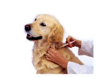 memelihara+anjing