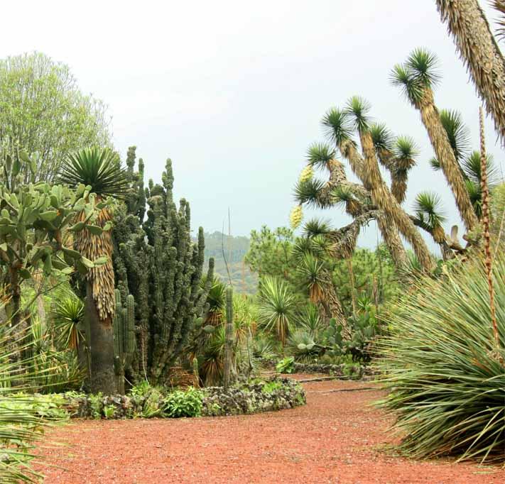 C digos de barras de la vida silvestre m xico barcode of Jardin botanico de la unam