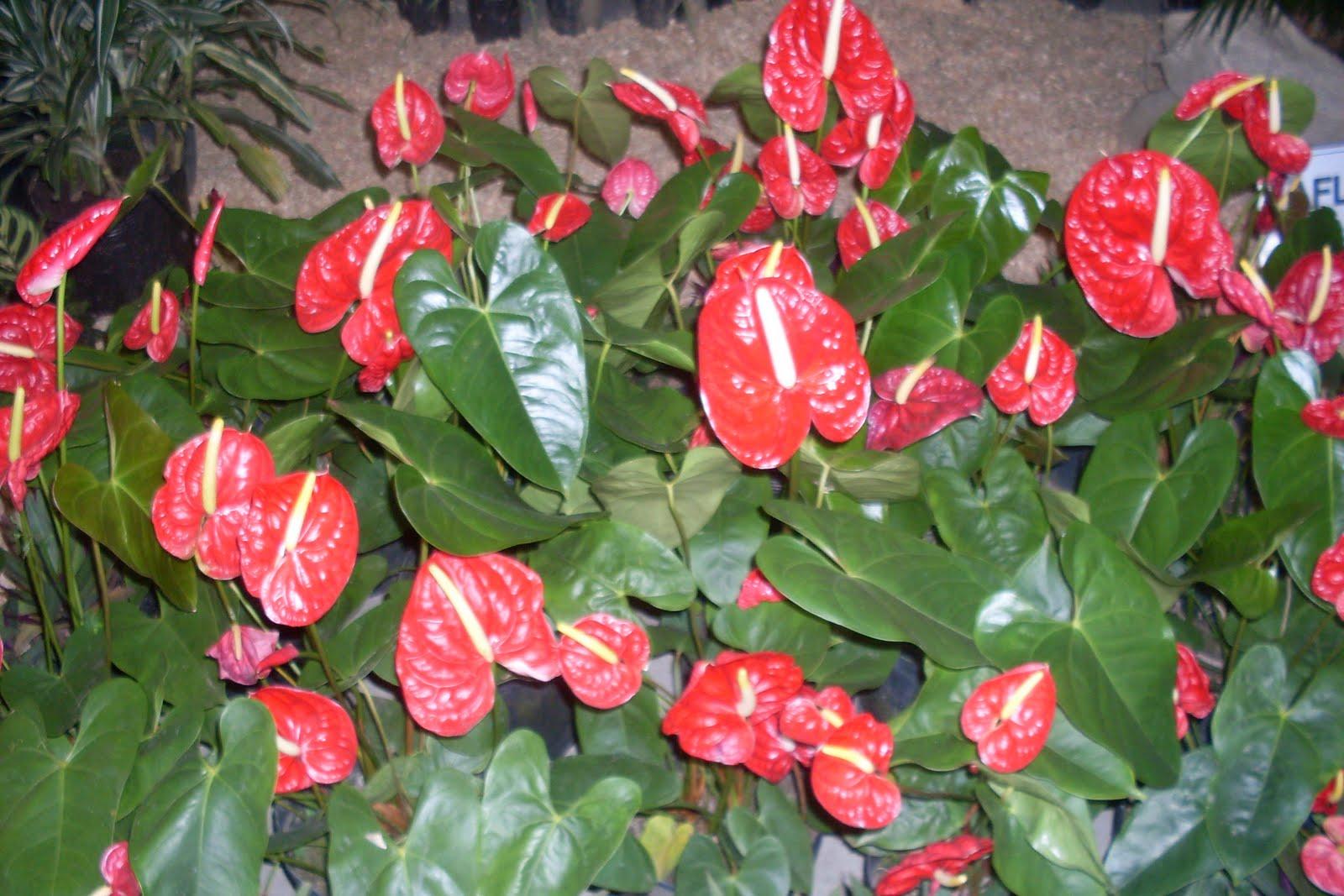 Viva flor plantas de meia sombra - Flores de sombra ...