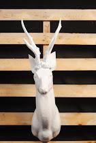 cervo bianco