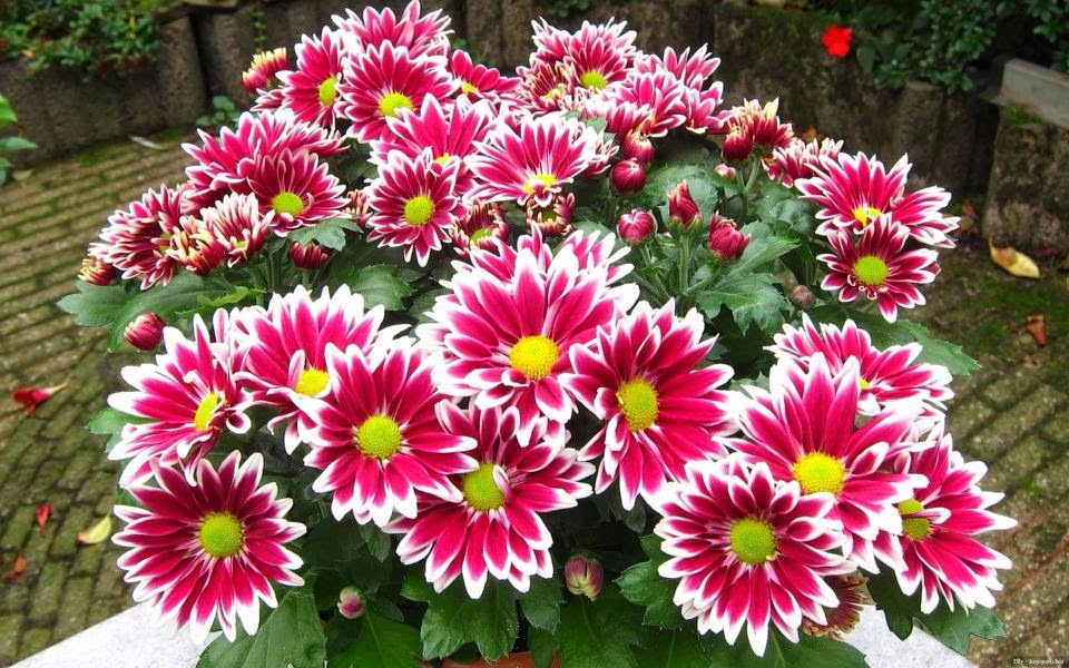 Top Star Indian Fili Hd Flowers World Recorded