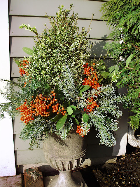 Winter container garden with oregonia and orange berries by Chalet's Specialty Garden Care staff