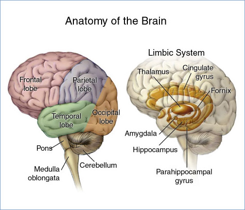 Post-Concussion Syndrome and Minnesota Workers\' Compensation ...