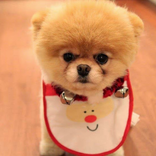 Foto-Foto Anjing Cantik