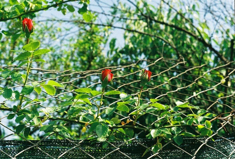 youarethepoet, filipa canic blog, you are the poet blog, analog, film photography, minolta srt 101