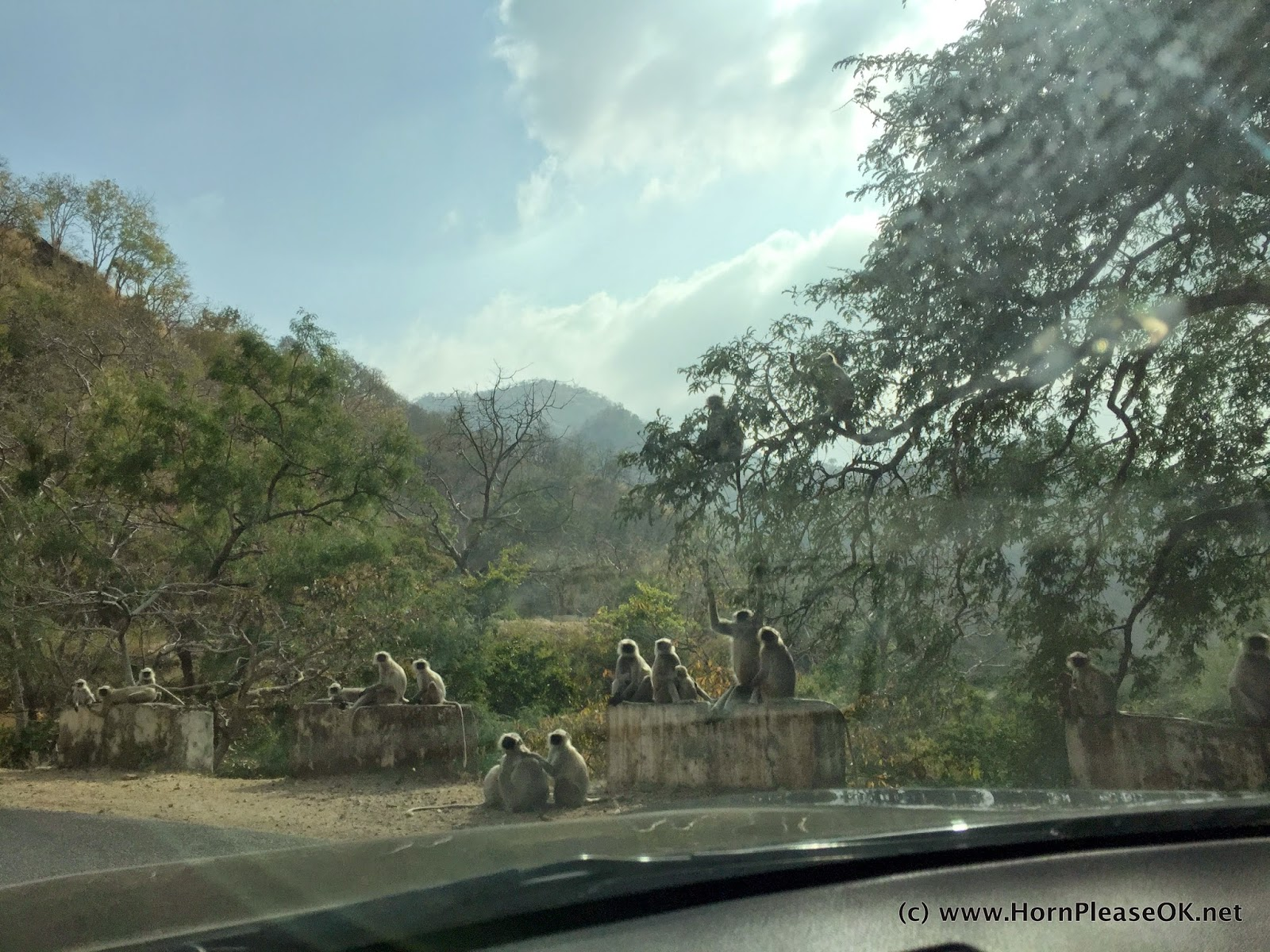 Langoors on the way to Kumbhalgarh fort