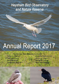 2017 HEYSHAM OBS REPORT AVAILABLE NOW