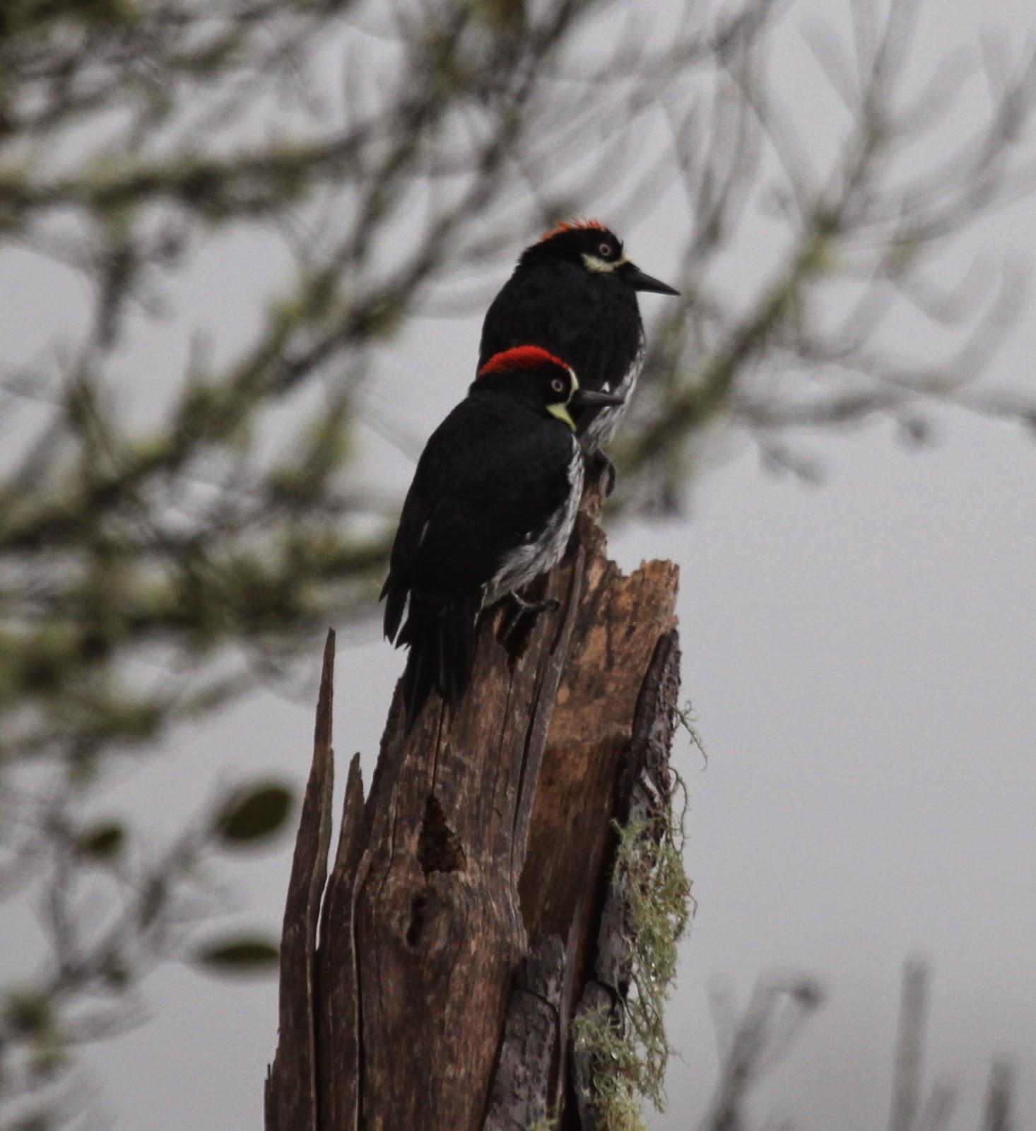 new england coastal birds part 4