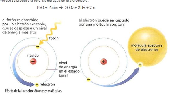 cuando los electones pasan del estado excitado al estado basal emiten una energa a con una determinada longitud de onda esa energa a puede ser absorbida por