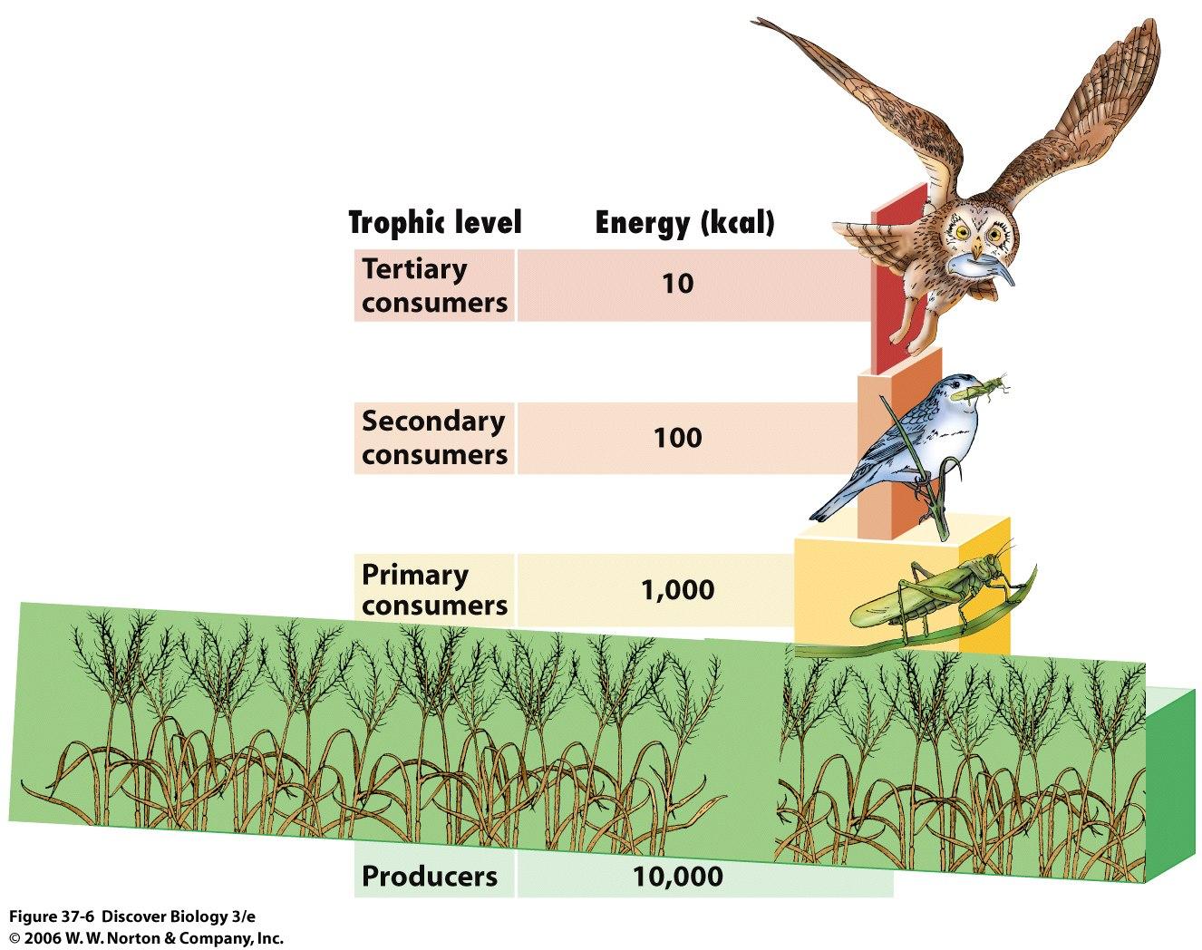 Ciencias de Joseleg: La pirámide ecológica