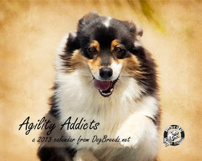 2013 Agility Calendar from DogBreedz.net