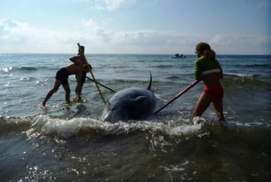 Οι πολεμικές ασκήσεις στο Ιόνιο σκότωσαν τα δελφίνια