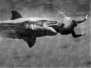 creepy scary weird wtf vintage photo image om nom shark diver eat kill
