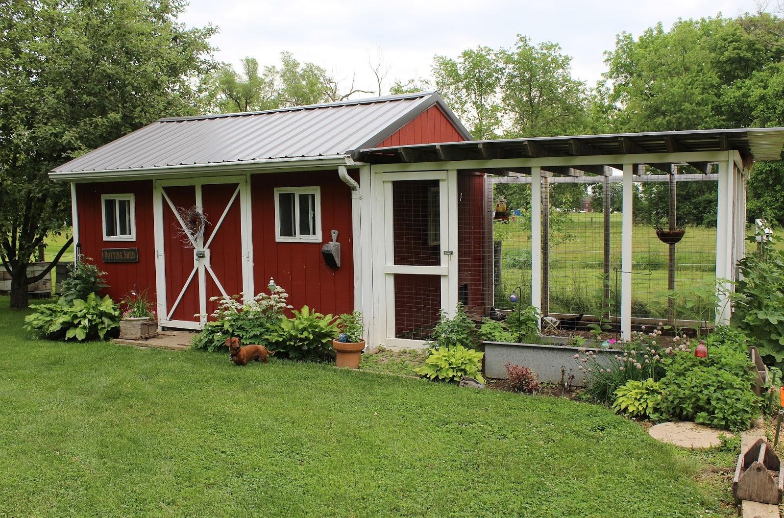 half gardening shed and half chicken coop with attached scratch yard near my vegetable garden
