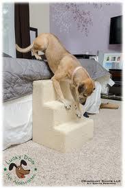 Cama box para cães