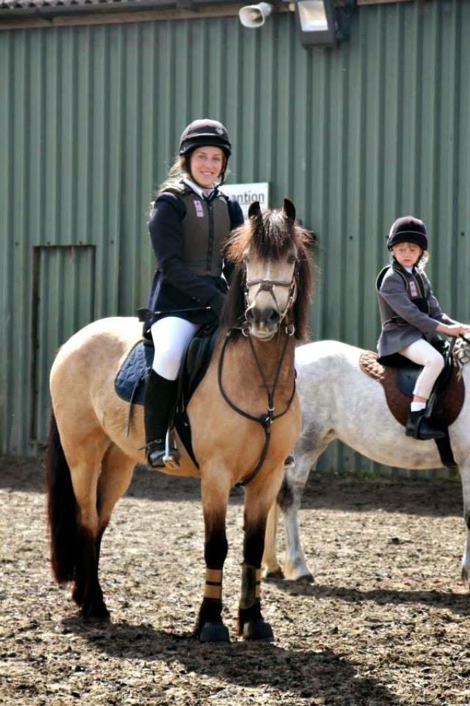 Show jumping Irish Connemara Pony
