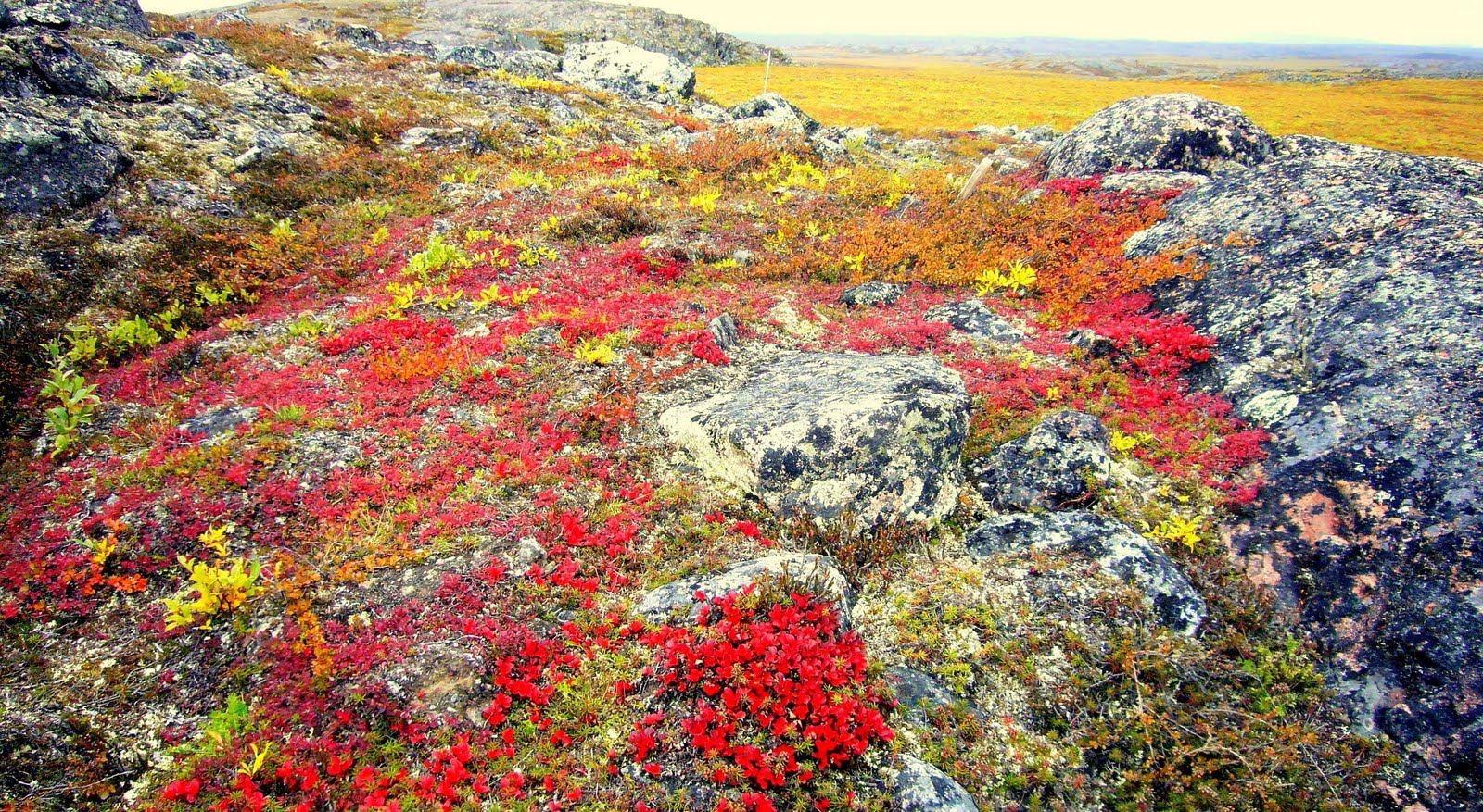 vegetation - Tundra