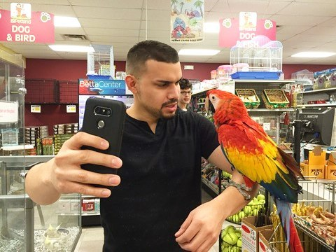 Ruben Sole and Pele the Parrot make great videos