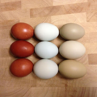 Marans, Easter Egger, and Olive Egger Eggs - Dare 2 Dream Farms