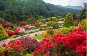 เทศกาลดอกไม้ ที่สวน The Garden of Morning Calm