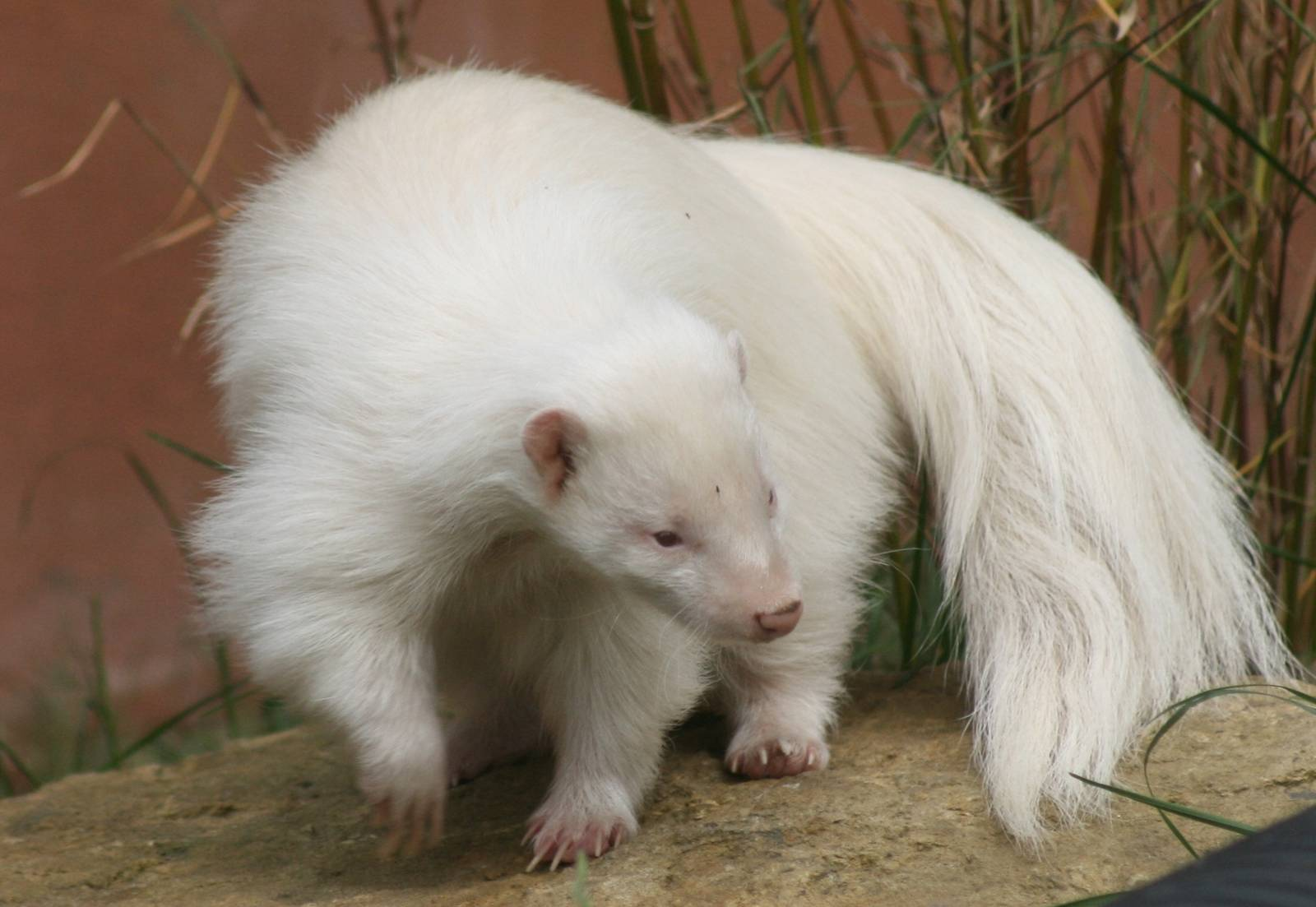 Welcome To Animal Cognizance Amazing Photographs Of Albino Animals - 22 adorable albino animals without colour