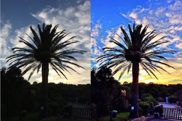 camera 360 palmier