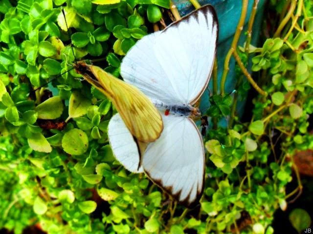 Imagenes de Mariposas, parte 7